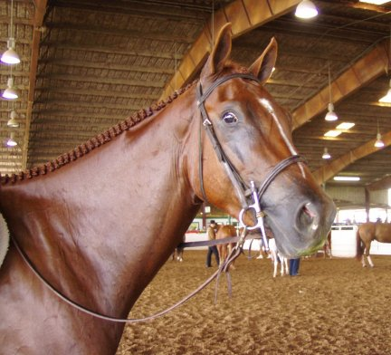 appy gelding, 3yo, Out of Surprisetexasgoldy