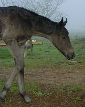 filly- 1 day, out of Johnnie Holland