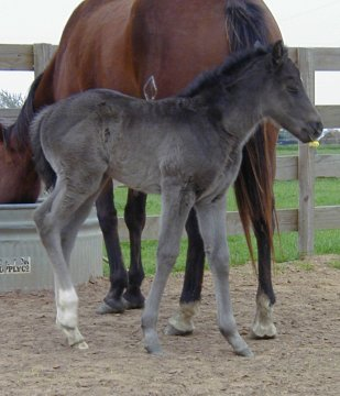 filly- 10 days, out of Johnnie Holland