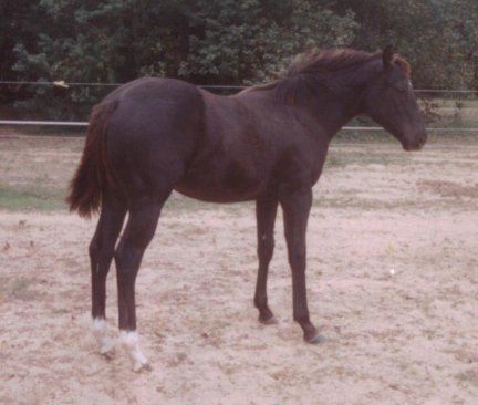 QH filly, out of Johnnie Holland