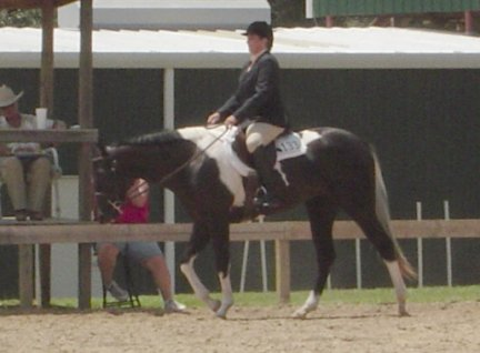 Paint Filly, 2yo, 1st Open show