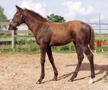 QH filly, 3 months, Out of LS Home Free