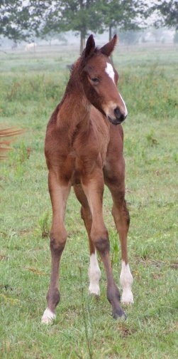 this year u0026 39 s foals