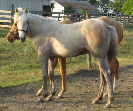 QH filly, -13 months, Out of Bostina Cream Pie