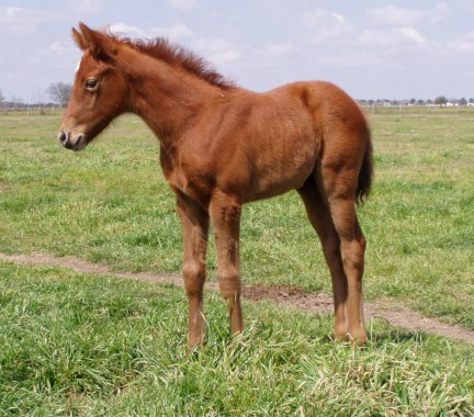 TB filly, -3 weeks, Out of Frosty Secretary