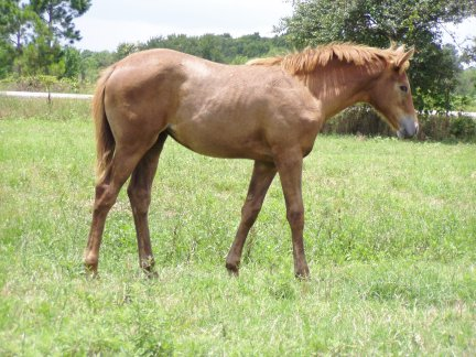 TB filly, -3 months, Out of Frosty Secretary