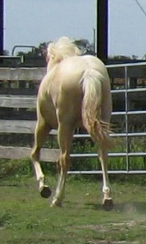 -yearling, Out of Rammers Rose
