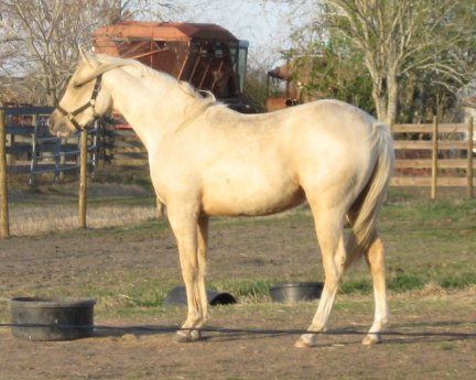 -2yo, Out of Rammers Rose