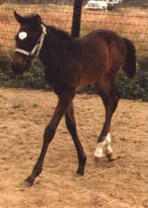 TB foal by Country Side
